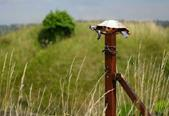 Image result for turtle on a fence post